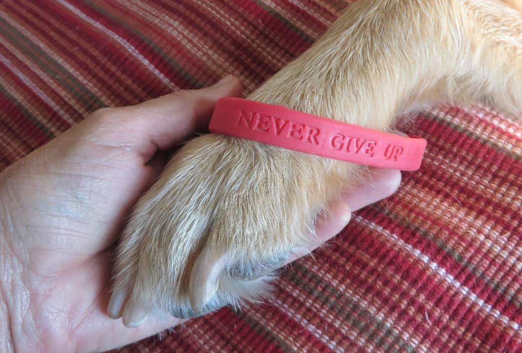 GP ALS bracelet